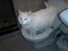 Lucky_toilet1